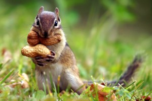 courtesy: http://www.animal-medical-clinic.com/squirrel-appreciation-day/