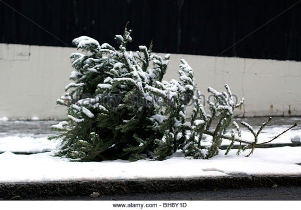 discarded-christmas-tree-on-a-london-street-in-january-bh8y1d